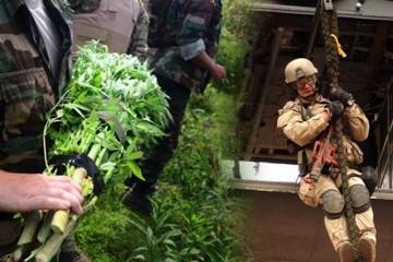 national-guard-raids-pot-growers