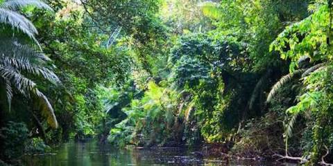 yusani-rainforest-oil-drilling