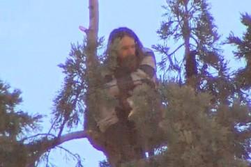 Man in tree 12_1458744026399_1135166_ver1.0