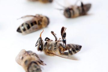 Dead-Bees
