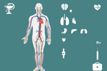 medical-anatomy
