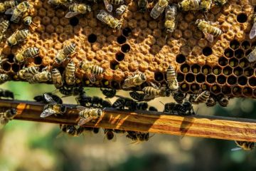 honeybee-hive-pixabay-768x512